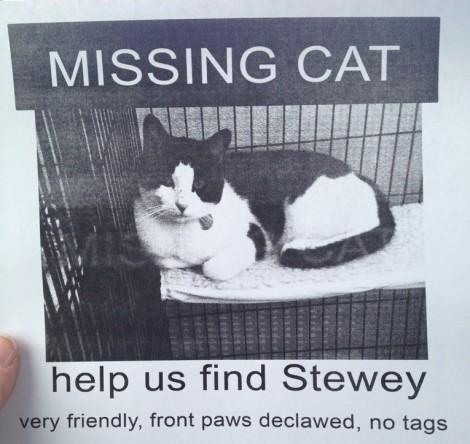 stewey.jpg