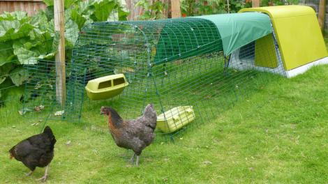 the lure of modern plastic chicken coops